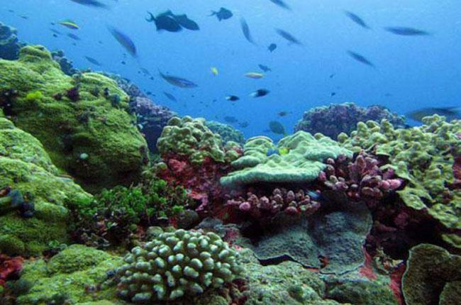 Pesona Taman Bawah Laut Di Pulau Abang, Batam