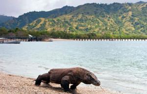 Pulau Komodo, Salah Satu Dari Tujuh Keajaiban Dunia